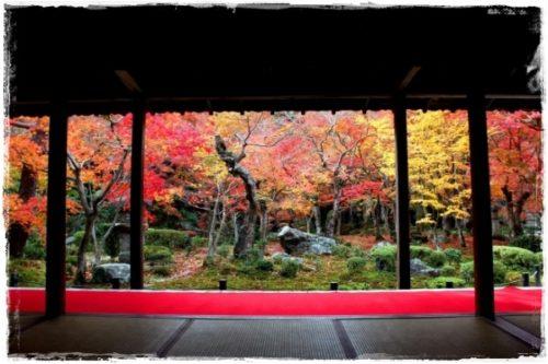 京都圓光寺の紅葉は混雑を避けた早朝拝観が狙い目!空いてる日程は?